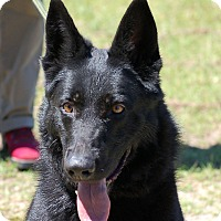 Adopt A Pet :: Lou Anne AD 05-20-17 - Preston, CT