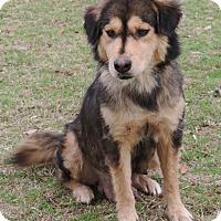 Adopt A Pet :: Lucy - Dublin, GA