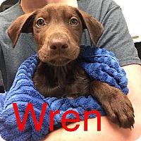 Adopt A Pet :: WREN - Beaumont, TX