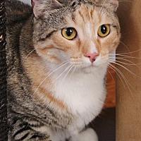 Adopt A Pet :: Camelia - San Jose, CA