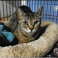 Adopt A Pet :: Iris - Medway, MA