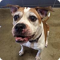 Adopt A Pet :: Gem - Jackson, MI