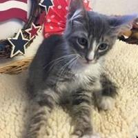 Adopt A Pet :: Aladdin - Brownwood, TX