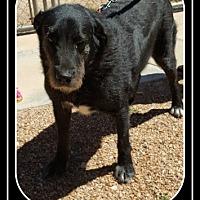 Adopt A Pet :: Angus - Tombstone, AZ