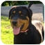 Photo 1 - Rottweiler Dog for adoption in Rexford, New York - Tara