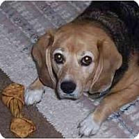 Adopt A Pet :: Baylee - Phoenix, AZ