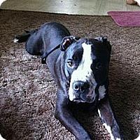 Adopt A Pet :: Bubba,loving to all! - Sacramento, CA