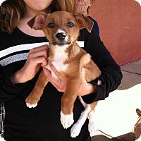 Adopt A Pet :: Little MJ - Los Angeles, CA