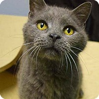 Adopt A Pet :: Davie - Merrifield, VA