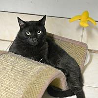 Adopt A Pet :: Hercules - Queens, NY