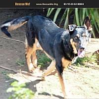 Adopt A Pet :: Tony - Norco, CA