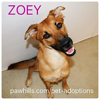 Shepherd (Unknown Type) Mix Puppy for adoption in Agoura Hills, California - Zoey