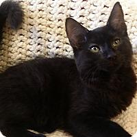 Adopt A Pet :: Brienne - Berlin, CT