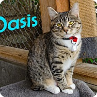 Adopt A Pet :: Oasis - Hamilton, MT