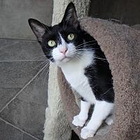 Adopt A Pet :: Dyson - Seguin, TX