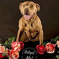 Adopt A Pet :: Rosie - Gillsville, GA