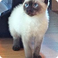 Adopt A Pet :: Wojoe - Escondido, CA