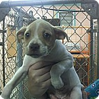 Adopt A Pet :: Prince Charming - Niceville, FL