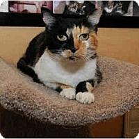 Adopt A Pet :: Mycah - Farmingdale, NY