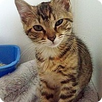 Adopt A Pet :: Jessica - Secaucus, NJ