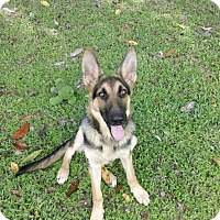 Adopt A Pet :: Bandit - Green Cove Springs, FL