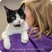 Adopt A Pet :: Splash - Byron Center, MI