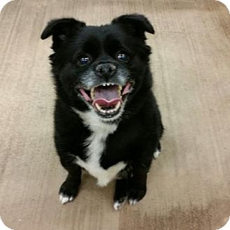Terrier (Unknown Type, Small) Mix Dog for adoption in Cleveland, Ohio - Oso