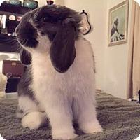 Adopt A Pet :: Ollie and Kiwi - Williston, FL