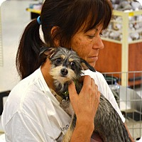 Adopt A Pet :: Angelina - Simi Valley, CA