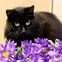 Adopt A Pet :: CLARA - Owenboro, KY