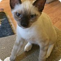 Adopt A Pet :: LucasA - North Highlands, CA