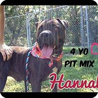 Pit Bull Terrier Mix Dog for adoption in Jackson, New Jersey - Hannah