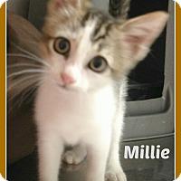 Adopt A Pet :: MILLIE - Malvern, AR