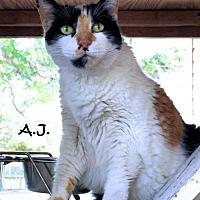 Adopt A Pet :: A.J - Sarasota, FL