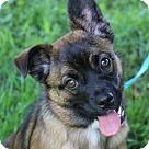 Adopt A Pet :: Stella - MEET ME @ PETCO 7.1.17!