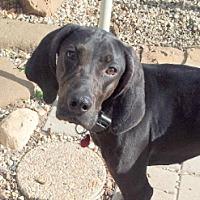 Adopt A Pet :: Lilah - Pardeeville, WI