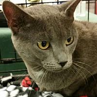 Adopt A Pet :: Carissa - Philadelphia, PA