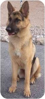 Shepherd (Unknown Type) Mix Dog for adoption in Las Vegas, Nevada - Rocky