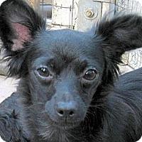 Adopt A Pet :: Charlotte - Oakley, CA