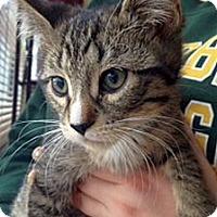 Adopt A Pet :: Kristof - Green Bay, WI