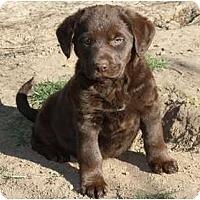 Adopt A Pet :: Coop - adoption pending - Glastonbury, CT