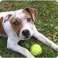 Adopt A Pet :: Chloe - Evansville, IN