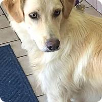Adopt A Pet :: Roush - Knoxville, TN