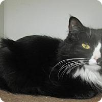 Adopt A Pet :: Henrietta - Norwich, NY