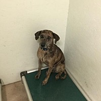 Adopt A Pet :: Tiger - Tuskegee, AL