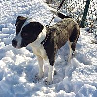 Adopt A Pet :: Kauze - Mead, WA
