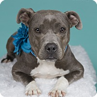 Adopt A Pet :: Honey - Baton Rouge, LA