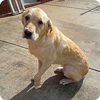 Adopt A Pet :: Sage - New Canaan, CT