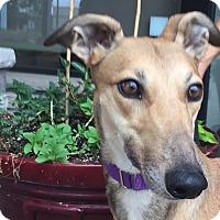 Adopt A Pet :: Bobbi - Coon Rapids, MN