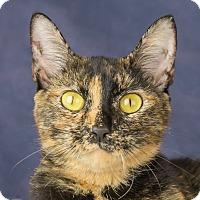 Adopt A Pet :: Rizzo - Columbia, IL